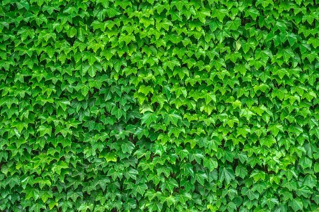 ᐈ Зеленые листья на белом фоне картинки и фотографии