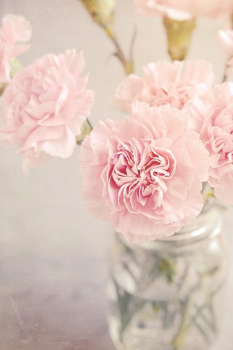 クローブ, 花, ピンク, ピンクの花, カーネーションのピンク, 入札, ロマンチックな, 花瓶, ガラス