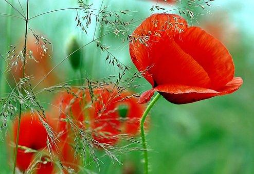 Pflanze, Natur, Leben