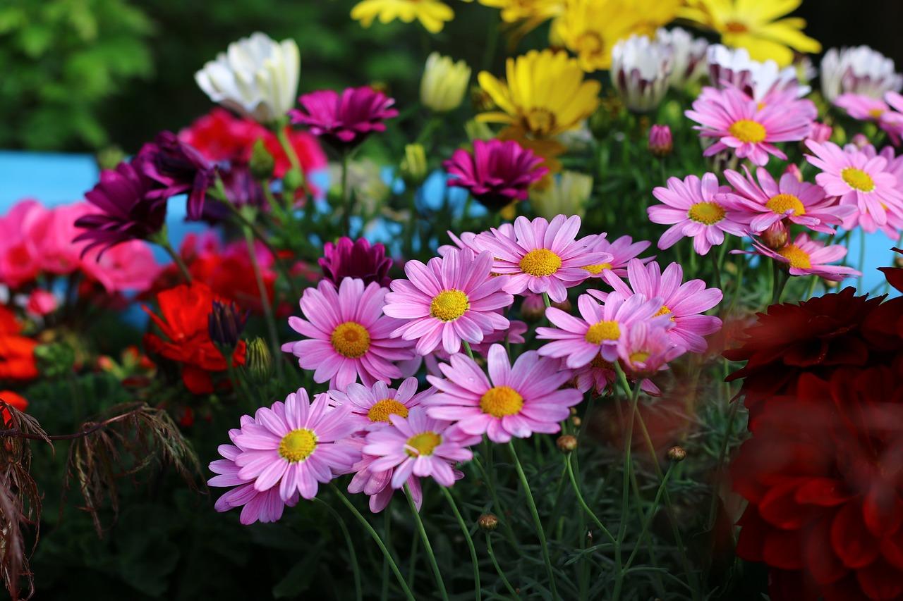 Приколы, картинка с летними цветами