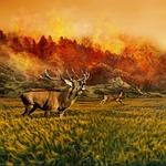 hirsch, roe deer, forest