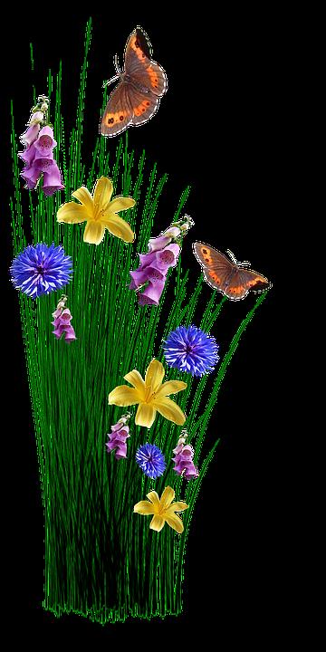 Kostenloses Foto: Frühling, Blumen, Gras, Wiese ...
