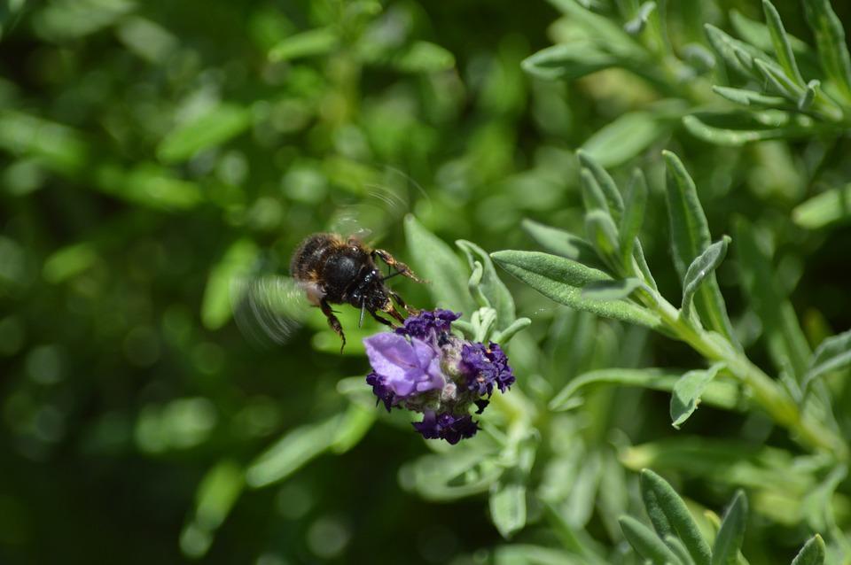 Опыляют ли цветы осы