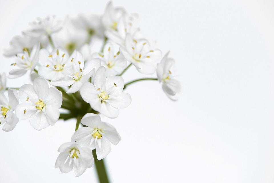 free photo flower, flowers, white  free image on pixabay, Beautiful flower