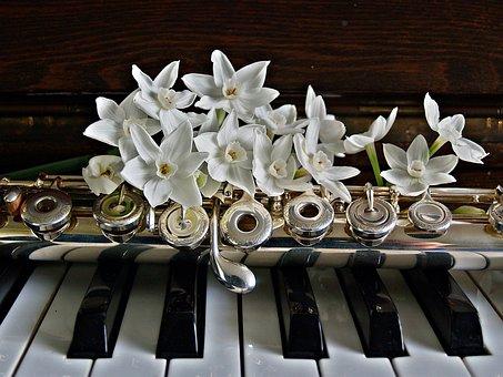 Piano, Flûte, Jonquilles, Fleurs