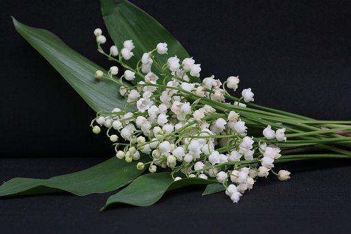 Muguet, 1Er Mai, Fleur, Clochette