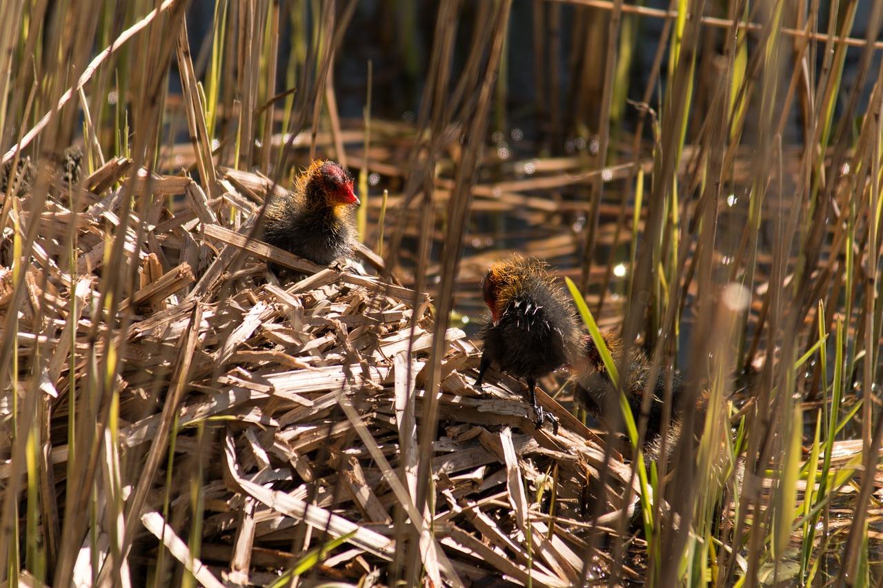 все птицы фото гнездятся в траве всего мира ценят