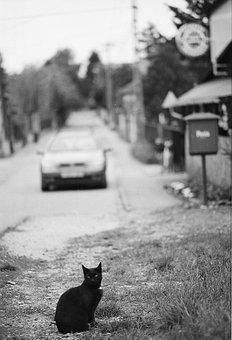 veľké hnedé mačička pics