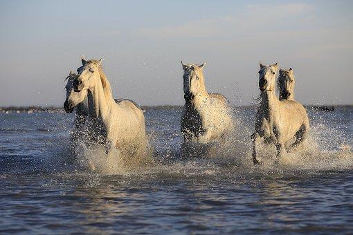 Chevaux, Troupeau, Cheval, Équitation