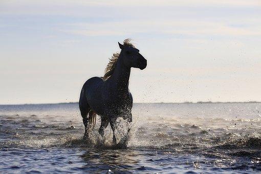 Pferd Bilder Pixabay Kostenlose Bilder Herunterladen