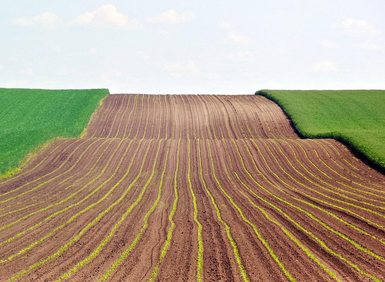 это посадка пшеницы картинки лазером