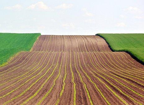 Начался сев озимых под урожай 2020 года - Минсельхоз не прогнозирует расширения площадей