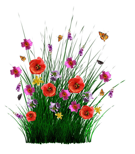 Открытки, полевые цветы картинки на прозрачном фоне