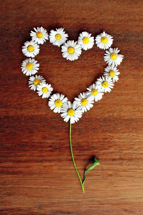 love heart shaped flowerflower - photo #14
