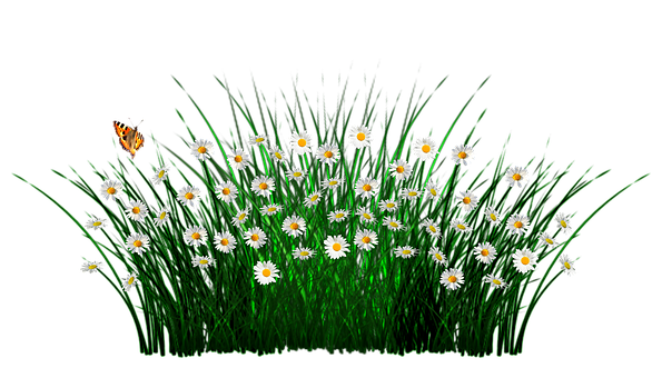 Spring, Flowers, Grass, Meadow, Plant