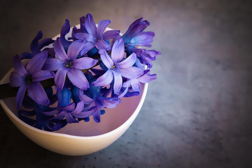 violet  free images on pixabay, Beautiful flower