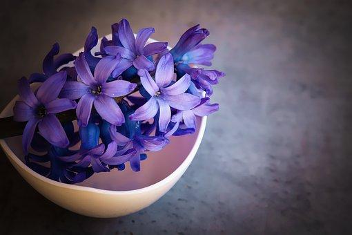 Hyacinth, Flower, Blue, Violet, Flowers