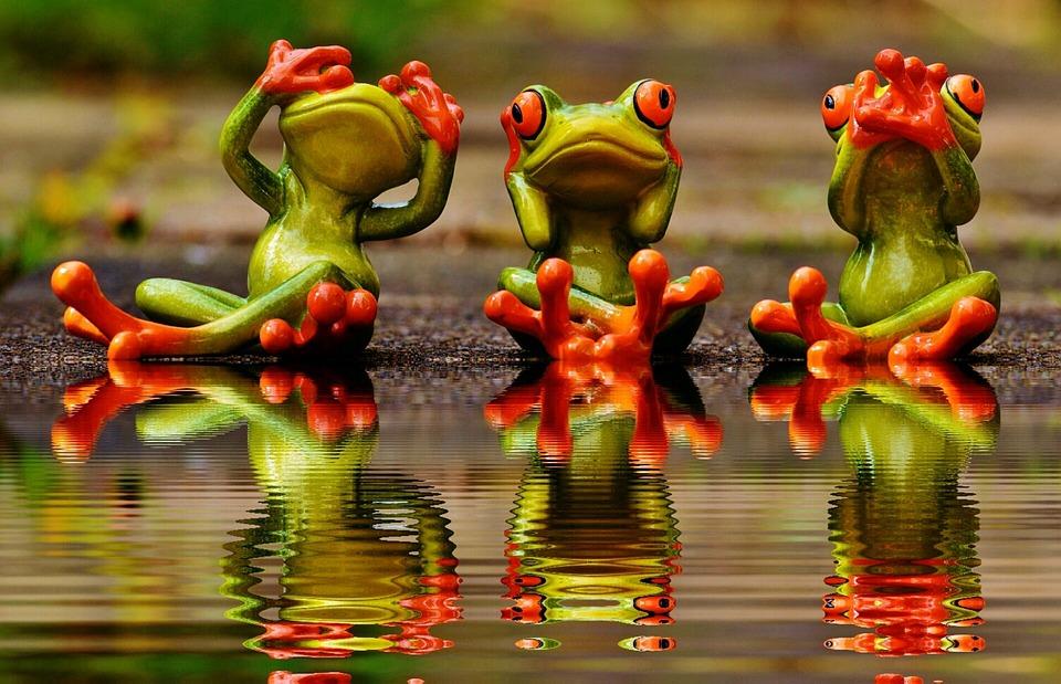 表示されません, 聞いていません, 話すことはありません, カエル, かわいい, おかしい, 銀行, 水