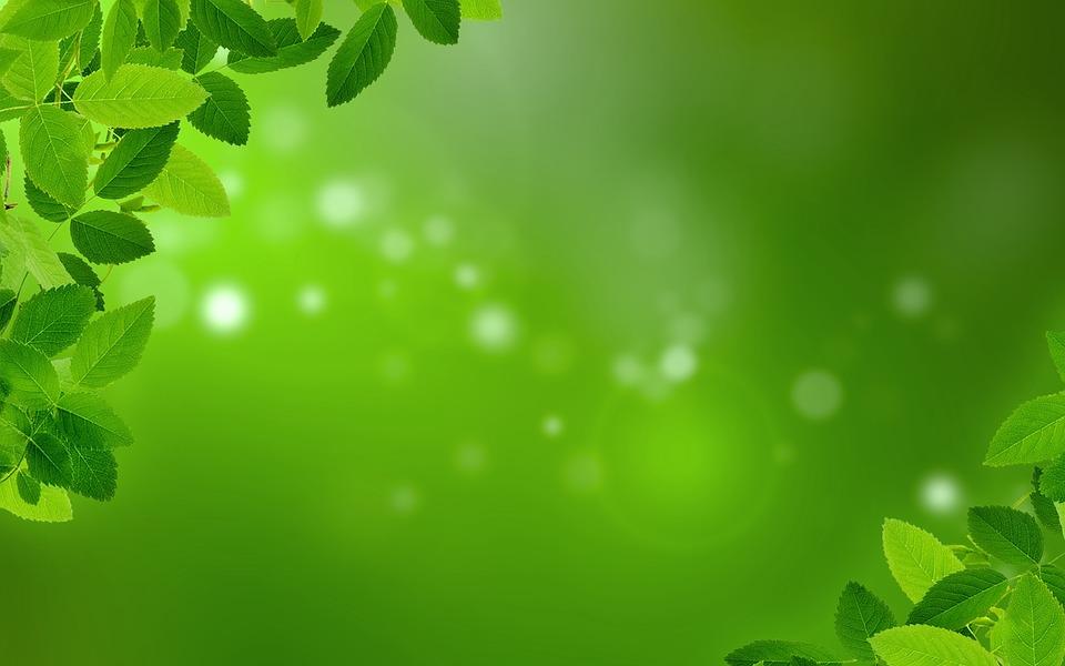 Зеленая листва фото