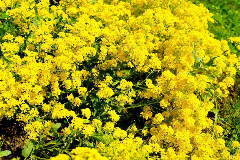 kostenloses foto blumen bl ten pflanze gelb kostenloses bild auf pixabay 1406777. Black Bedroom Furniture Sets. Home Design Ideas