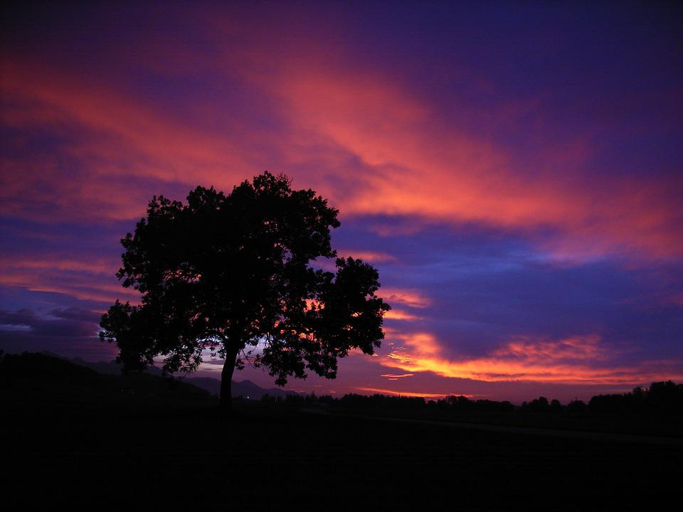 Silhouette of Bare Tree during Sunset ? Free Stock Photo