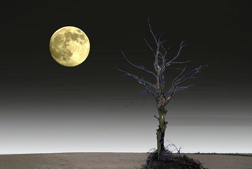 Arbre Solitaire, Lune, La Plénitude De