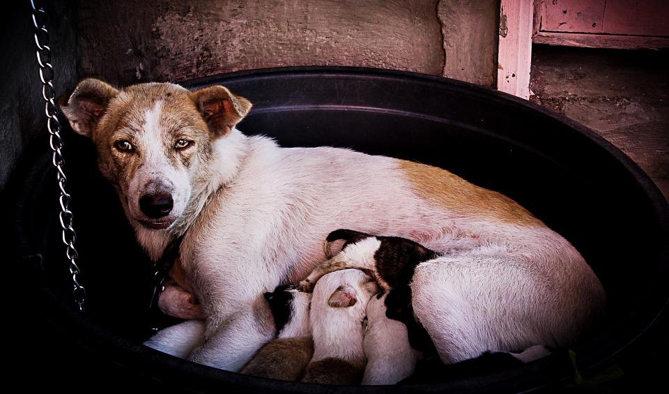 hunde og mælk