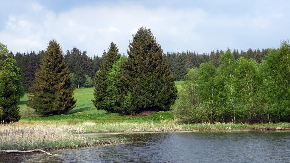 Idilio Bosque Coníferas · Foto Gratis En Pixabay