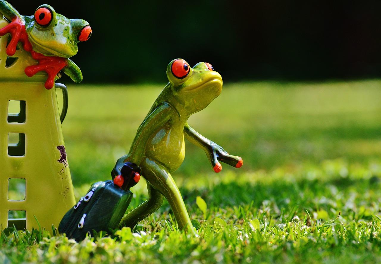 Картинка с лягушкой смешная