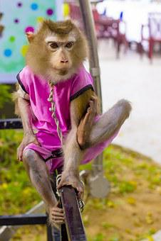 Pet Monkey Monkey Foot True Gas Action Squ