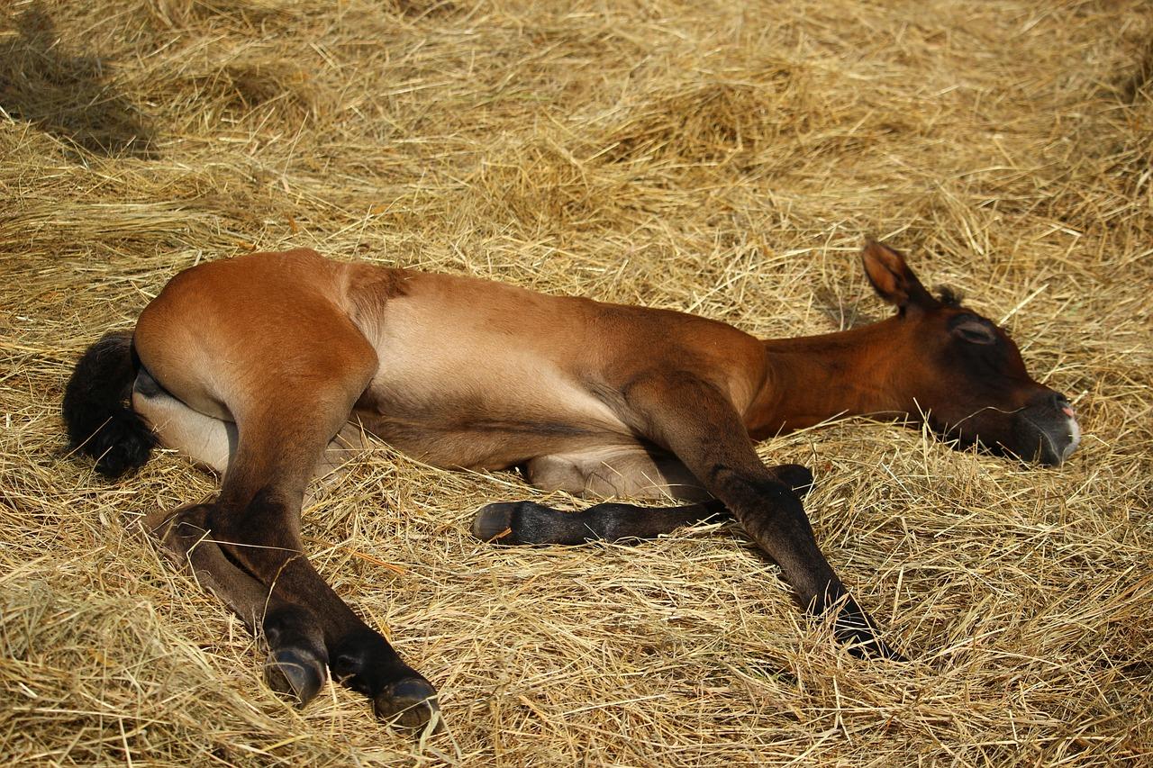 Жеребец (если слово «жеребец» отражает содержание вашего сна более точно, чем слово «конь» или «лошадь«) — символизирует мужской азарт.