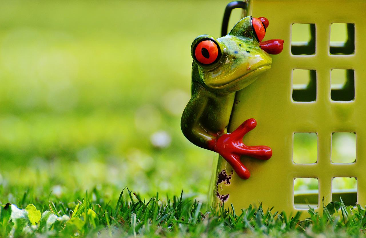 Картинки жаб прикольные