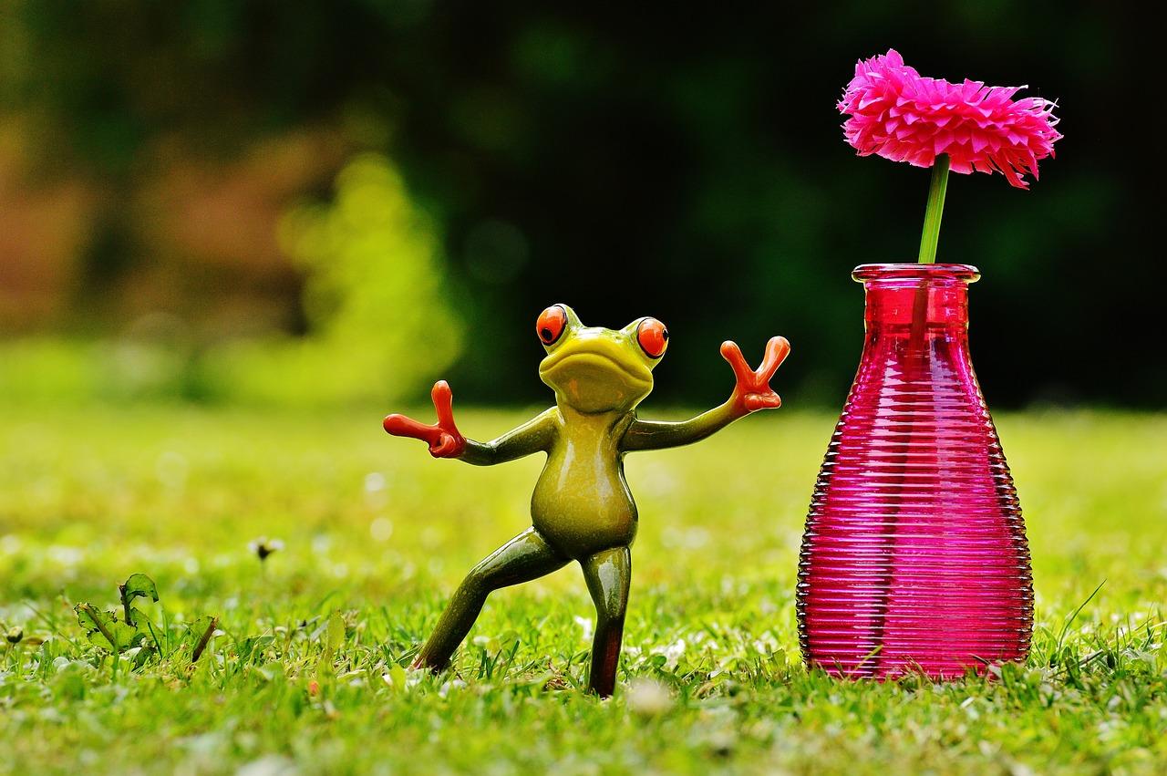 Смешная картинка цветочек, днем