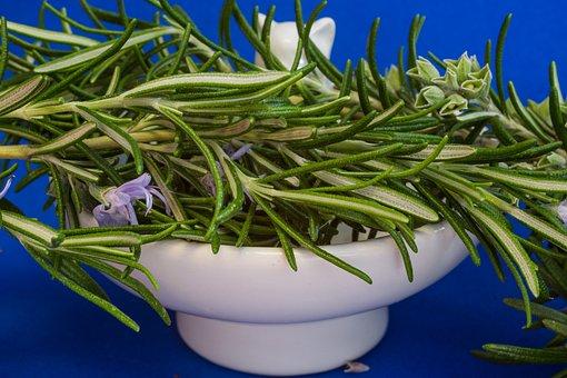 Rozmaring, Fűszernövények, Gyógynövények