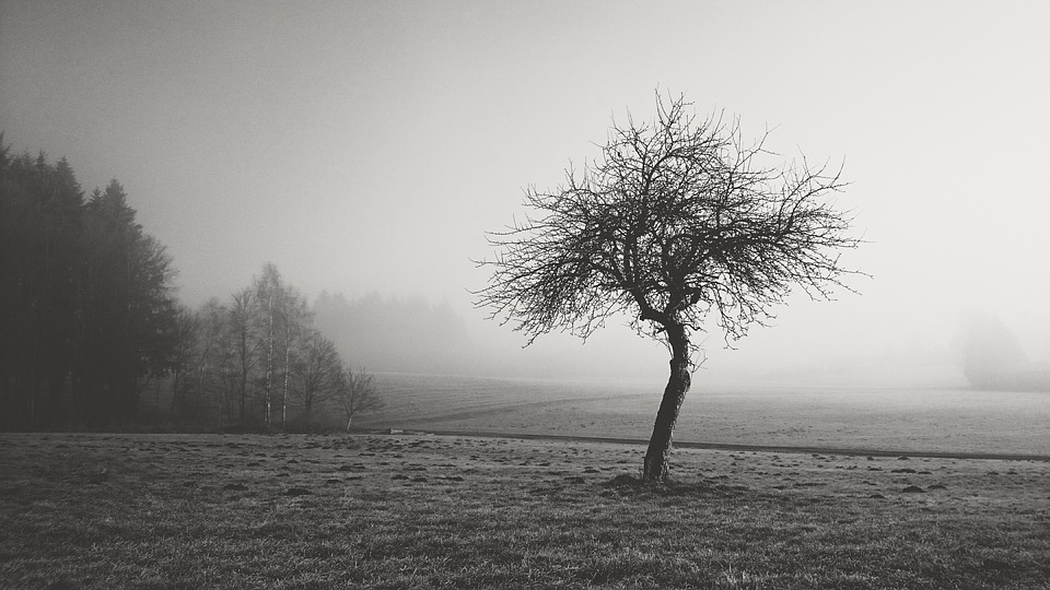 Fog nature black and white landscape forest mood