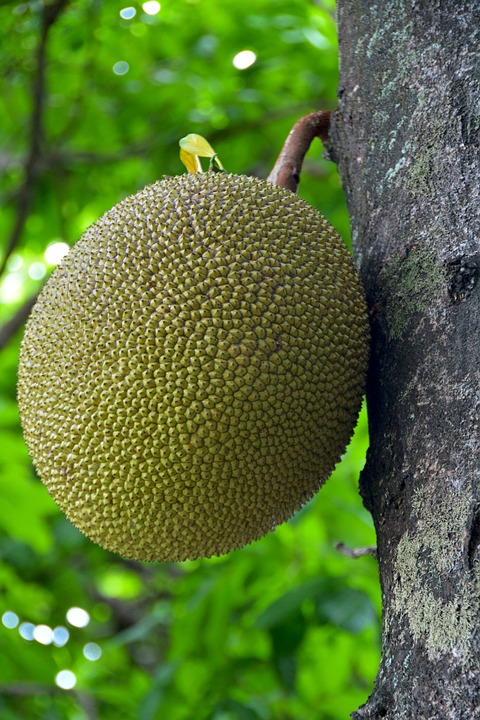 jack, fruit  free images on pixabay, Beautiful flower