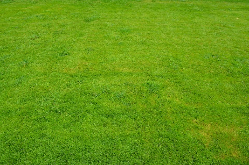 Lawn grass green free photo on pixabay for Best grass for landscaping
