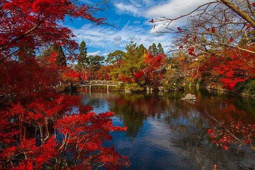 日本, アジア, 葉, 古代, 自然, 木, 禅, 庭, 風景, 文化, 寺
