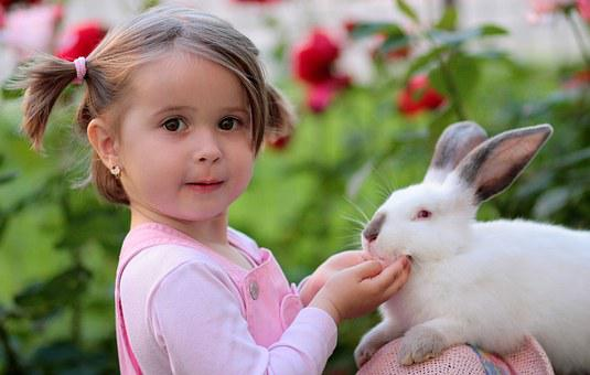 Rabbit Images Pixabay Download Free Pictures