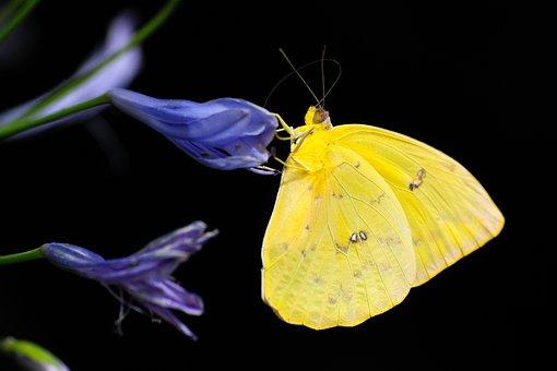 Fjäril, Insekt, Färgglada, Djur, Vinge