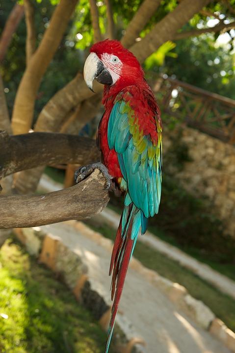 Burung Beo Foto Gratis Di Pixabay