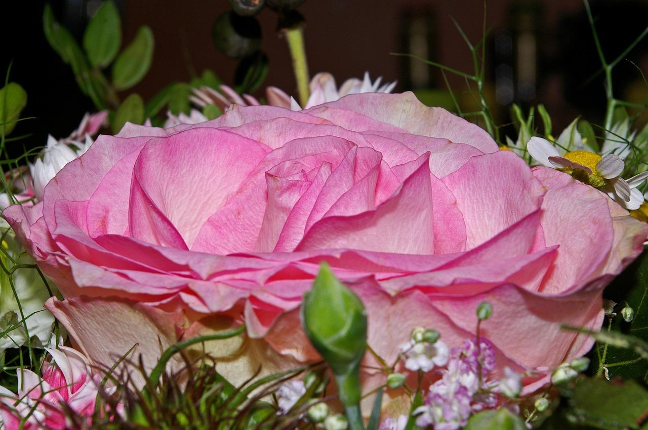 Фото любовных цветов
