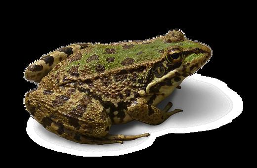 50+ Free Frog Background & Frog Images - Pixabay