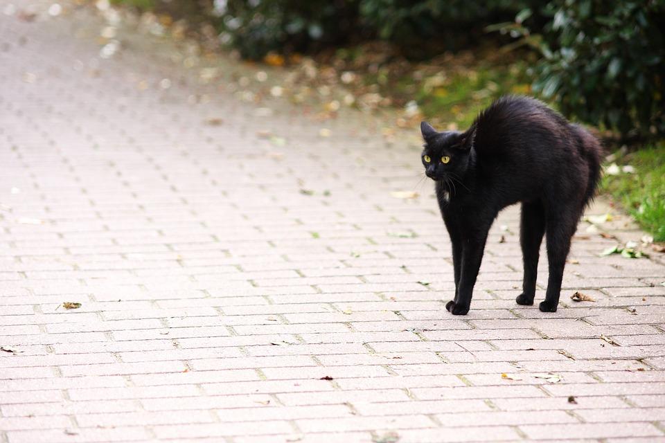 Friday 13, Hypnosis, Look, Cat, Cat Eyes, Animal