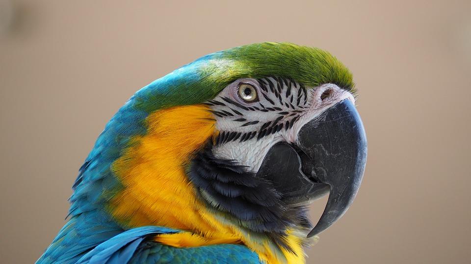 amazon bird
