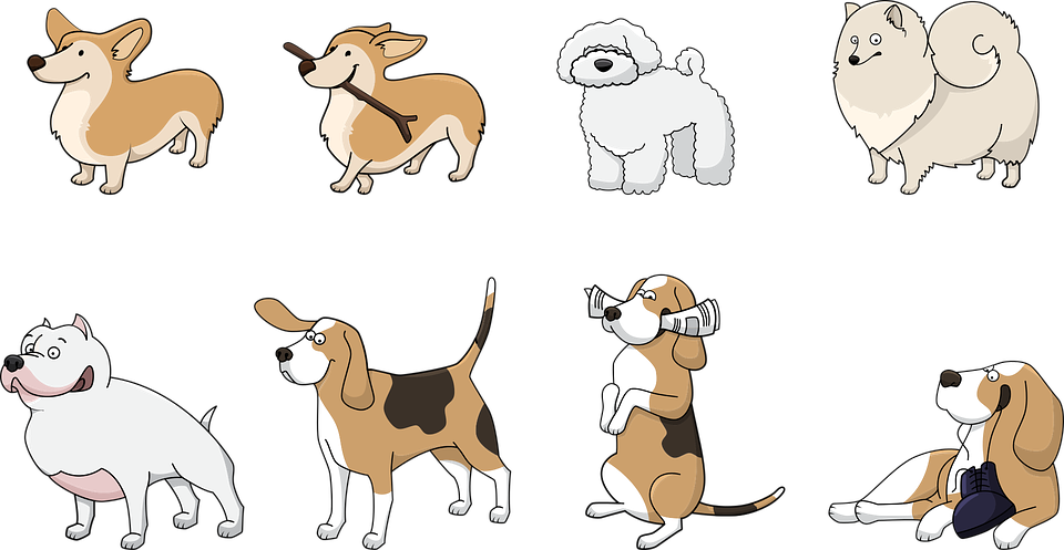Dog, Animal, Corgi, Beagle, Bolonka, Spitz, Pitbull