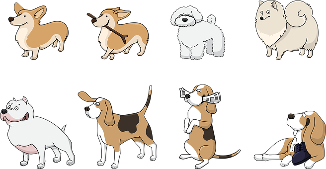 Dog, Animal, Corgi, Beagle, Bolonka