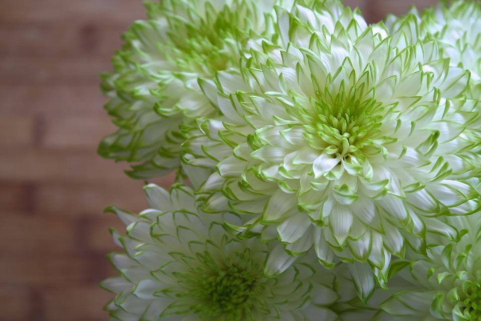 Flowers white green free photo on pixabay flowers white green spring garden plant sun mightylinksfo