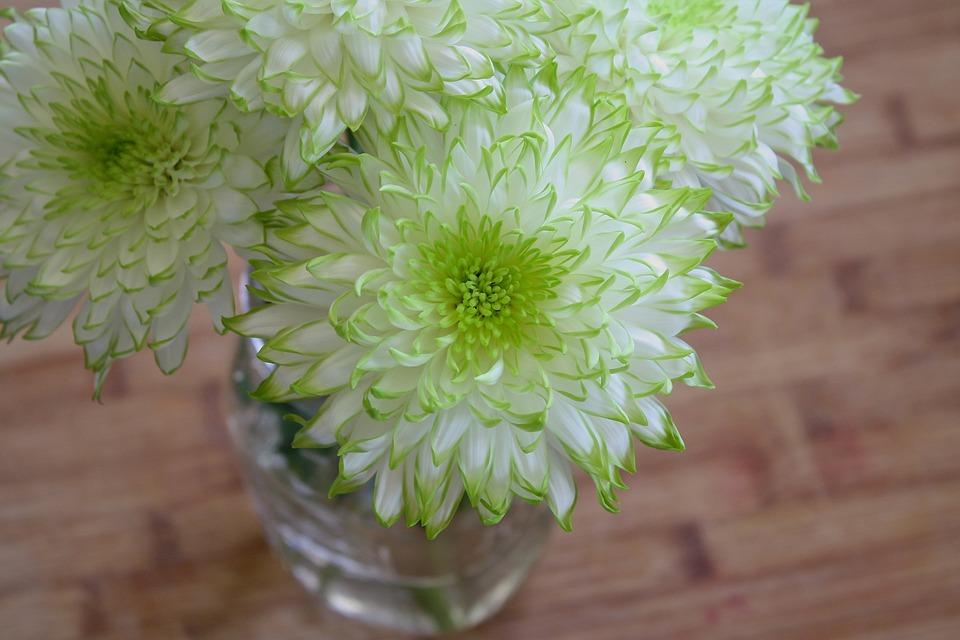 Blumen Weiß Grün · Kostenloses Foto auf Pixabay