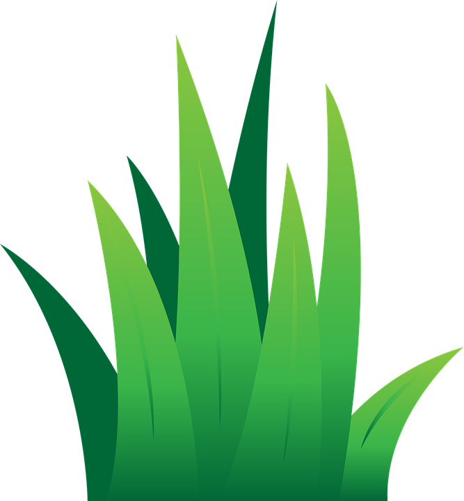 lawn green grass free vector graphic on pixabay rh pixabay com